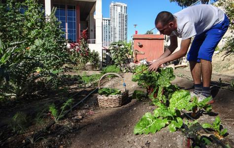 Planting Seeds@City